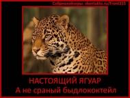 настоящий ягуар, а